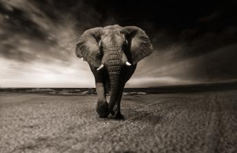 elephant-2870777_1920