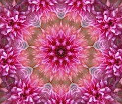 flower-1543895_640.jpg
