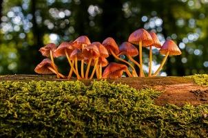 mushroom-3659165_640.jpg